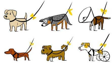Sárga szalag a kutya pórázán. Mit jelent?